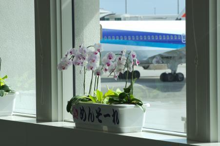 花和飞机免费图片