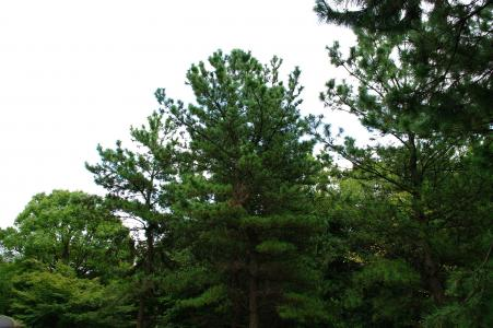 森林(Kasai Rinkai Park)免费图片