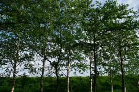 木免费图片