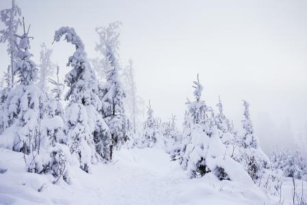 在大雪下的山森林足迹