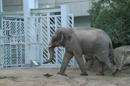 大象免费图片