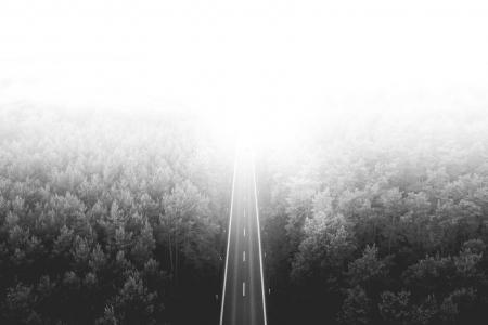 通过森林的长的寂寞路