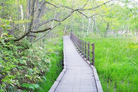 平冈公园免费图片