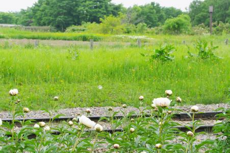 鲜花和曲目免费照片
