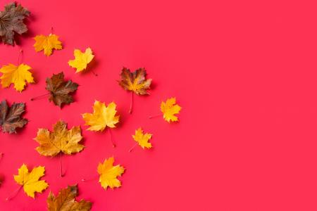 Autumn Leaves on Flat Red Background with Room for Text #3
