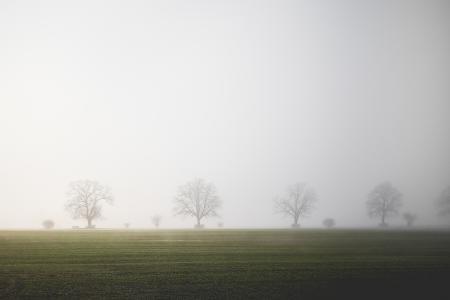 有雾的字段