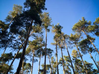 森林里的另一棵树