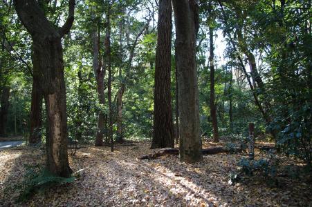 明治神宫的森林的免费材料
